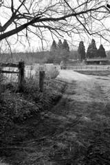 牧場の風景9