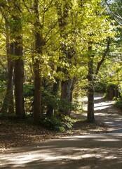 秋色の坂道