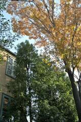 高い木のある家