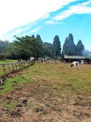 牧場の秋2