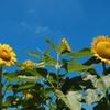 八月の青い空