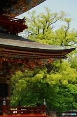 成田山五月詣12