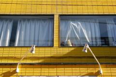 窓辺のワンちゃん