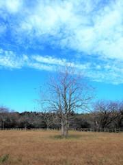 牧場の秋5