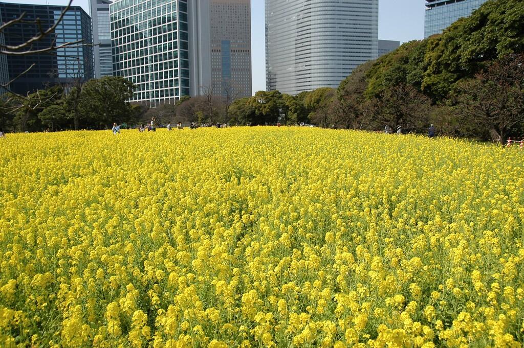 浜離宮恩賜公園の春(過去写真)