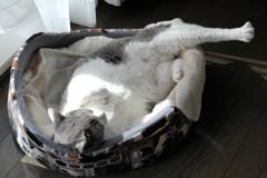 寝相の悪いネコ