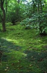 苔を楽しむ