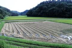 収穫 そして次の準備へ