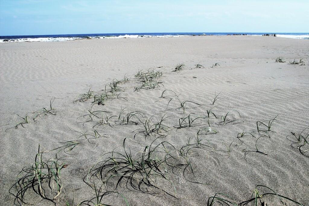 砂浜で生きる