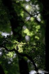 涼しい木陰