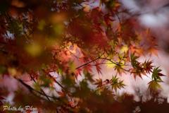 秋の終わりに 3