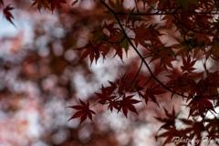 秋の終わりに 2