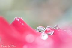 雨の愉しみ01