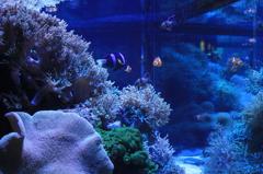 珊瑚とたわむれて