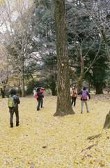 銀杏の木の下