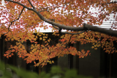 童子苑の紅葉