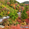 京都の紅葉2020 その4