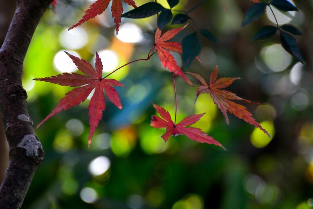 行く秋を惜しんで