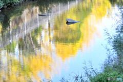 秋色の映り