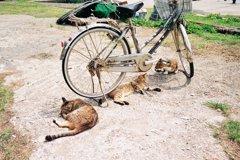 自転車ねこさん