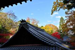 本堂から 秋本番