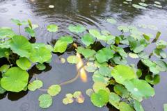 蛇と鯉の遭遇 氷室池