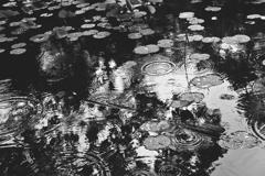 波紋 雨の氷室池