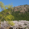 朽木村の春