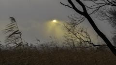 冬の琵琶湖畔1