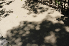 猛暑の詩仙堂1