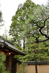雨の高桐院入口2