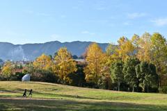 秋日和の公園