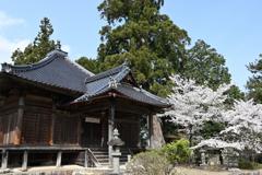 大木と桜 田舎の古刹