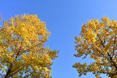 快晴 秋日和の公園