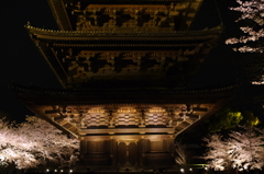 五重塔  夜桜