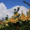 夏の空に咲く