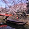 桜に似合う風景