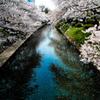 松川べり 春の情景