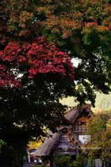 初秋の白川村