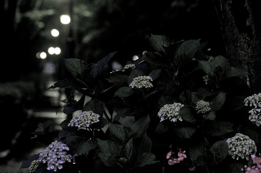 開花はもうすぐ
