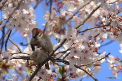 春のデュエット