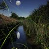 月夜の蛍Ⅱ