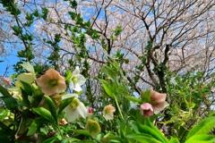 桜と野草花