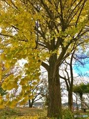 秋晴れポタリング2