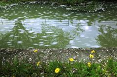 春の小川はサラサラ・・Ⅱ