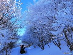 青空の樹氷