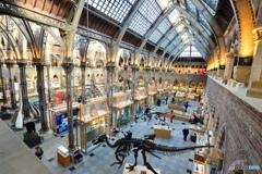 オックスフォード大学自然史博物館3