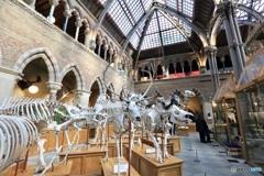 オックスフォード大学自然史博物館2