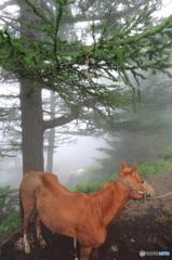 乗馬でハイキング