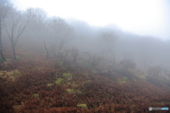 濃霧の晩秋